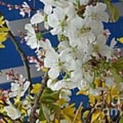 Spring Life In Still-life Poster