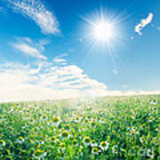 Spring Meadow Under Sunny Blue Sky Poster