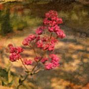 Spring Mignonette Flower Poster