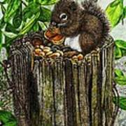 Spring Nuts Poster