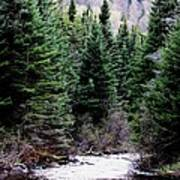 Spring On The Stream Poster by Will Boutin Photos