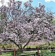 Spring Picnic Poster