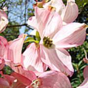 Spring Pink Dogwood Floral Art Prints Flowers Poster