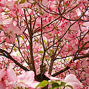 Spring Pink Dogwood Tree Blososms Art Prints Poster by Baslee Troutman