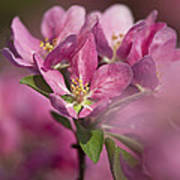 Spring Pink... Poster