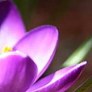 Spring Purple Poster