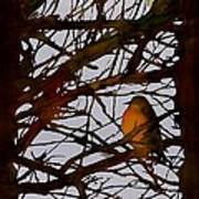 Spring Robins Gather Poster