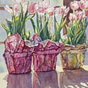 Spring Shadows Poster