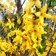 Spring - Sprig Of Forsythia Poster