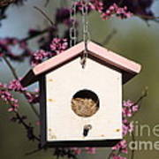 Spring Time Bird House Poster