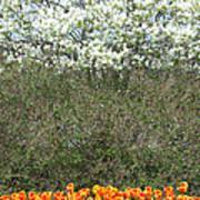 Spring Time Blooms Poster
