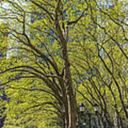 Spring Time In Bryant Park New York Poster by Angela A Stanton