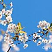 Spring Tree Poster