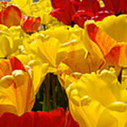 Spring Tulips Art Prints Yellow Red Tulip Flowers Poster