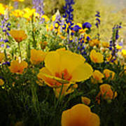 Spring Wildflowers Poster