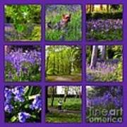 Spring Woodland Picture Window Poster