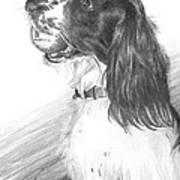 Springer Spaniel Playing Fetch Pencil Portrait Poster