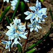Springtime Blues Poster