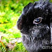 Springtime Bunny Poster