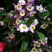 Springtime Flowers At Biltmore Estate Poster