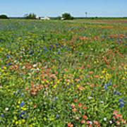 Springtime In Texas 6 Poster