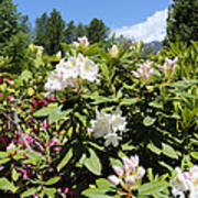 Springtime In The Cascades Poster