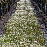 Springtime In The Vineyards Poster