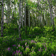 Springtime On The Grand Mesa Poster