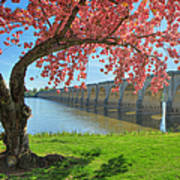 Springtime On The River Poster