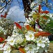 Springtime Pear Blossoms - Hello Spring Poster