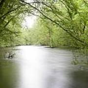 Springtime River Poster