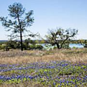 Springtime Texas Bluebonnets Naturalized Poster