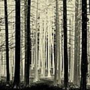 Spruce Magic Poster