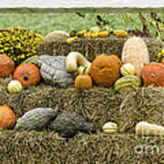 Squash Gourds And Pumpkins Poster