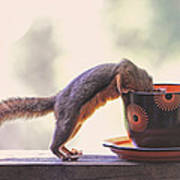 Squirrel And Coffee Poster
