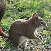 Squirrel And His Sunflower Seed Poster