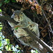 Squirrel By Nest Poster