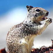 Squirrel Enjoying Lunch On The Beach Poster
