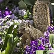 Squirrel In The Botanic Garden-dallas Arboretum V2 Poster