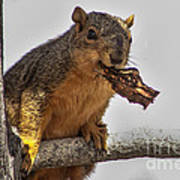 Squirrel Lunch Time Poster by Robert Bales