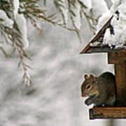 Squirrel On The Bird Feeder Poster