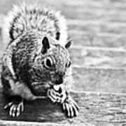 Squirrel Poster by Paulina Szajek
