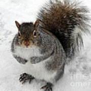 Squirrel Saying Feed Me Please At Niagara Falls Poster