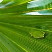 Squirrel Tree Frog Poster
