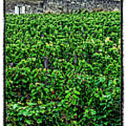 St. Emilion Winery Poster