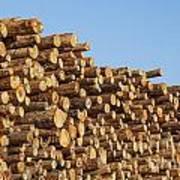 Stacks Of Logs Poster