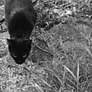 Stalking Cat Poster