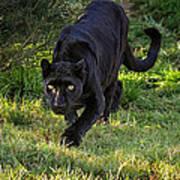 Stalking Leopard Poster