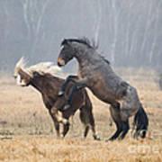 Stallion Challenge Poster