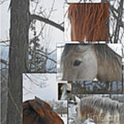 Stallions Collage There Is A Connection Poster